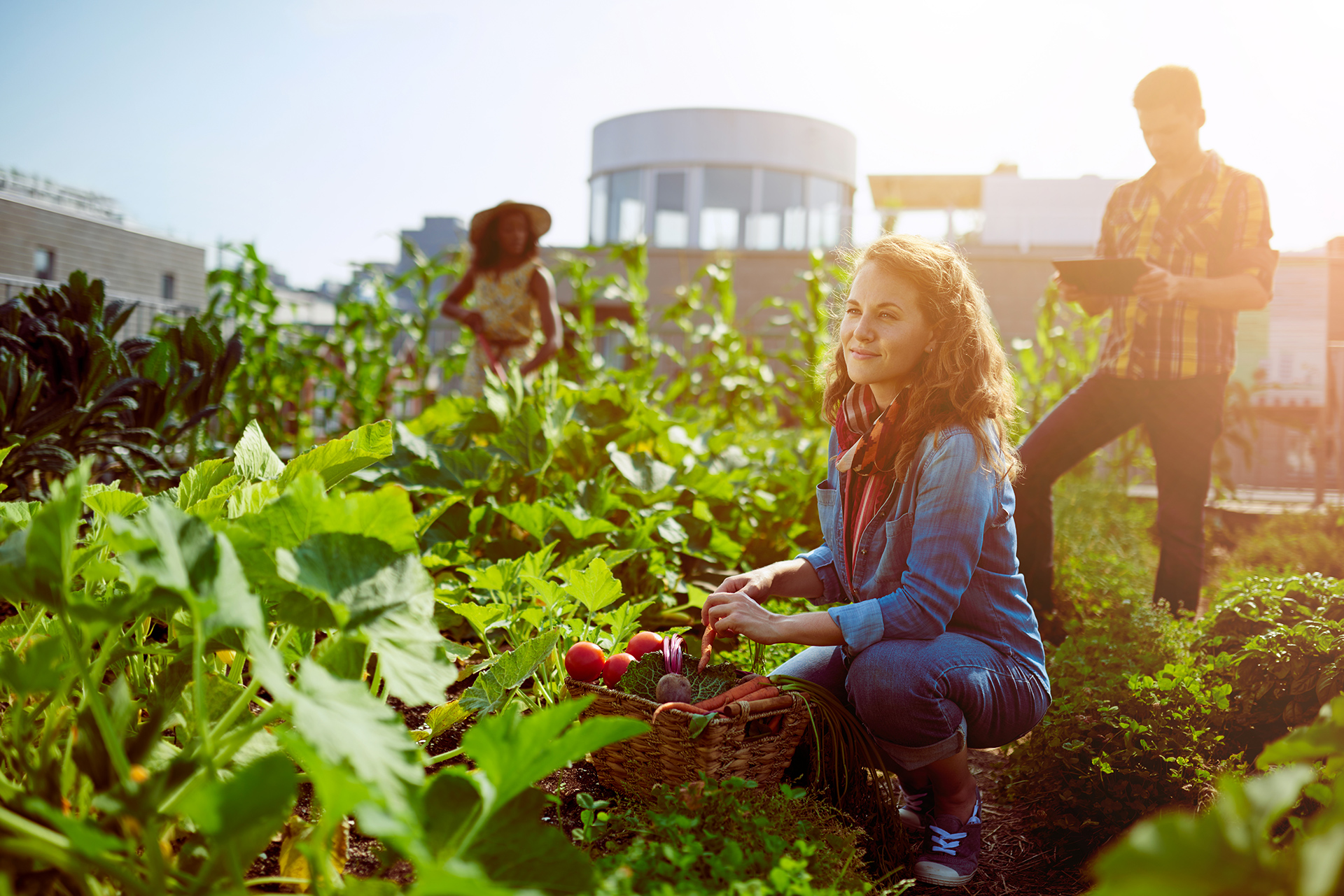 Les jardins partagés : au cœur de la consommation collaborative
